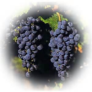 Chardonnay Wine Vinegar  #978