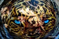 tigresS web