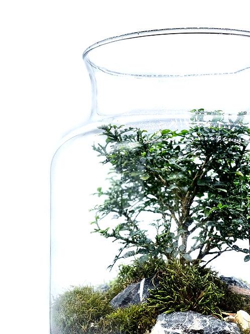 草木生態瓶-小葉九里香