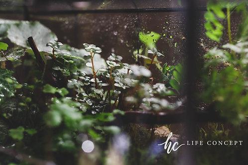 綠野叢林小屋-綠野仙蹤