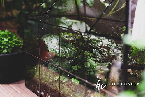 綠野叢林玻璃屋-綠野仙蹤