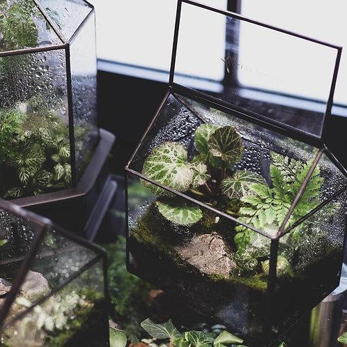叢林小屋 小屋系列