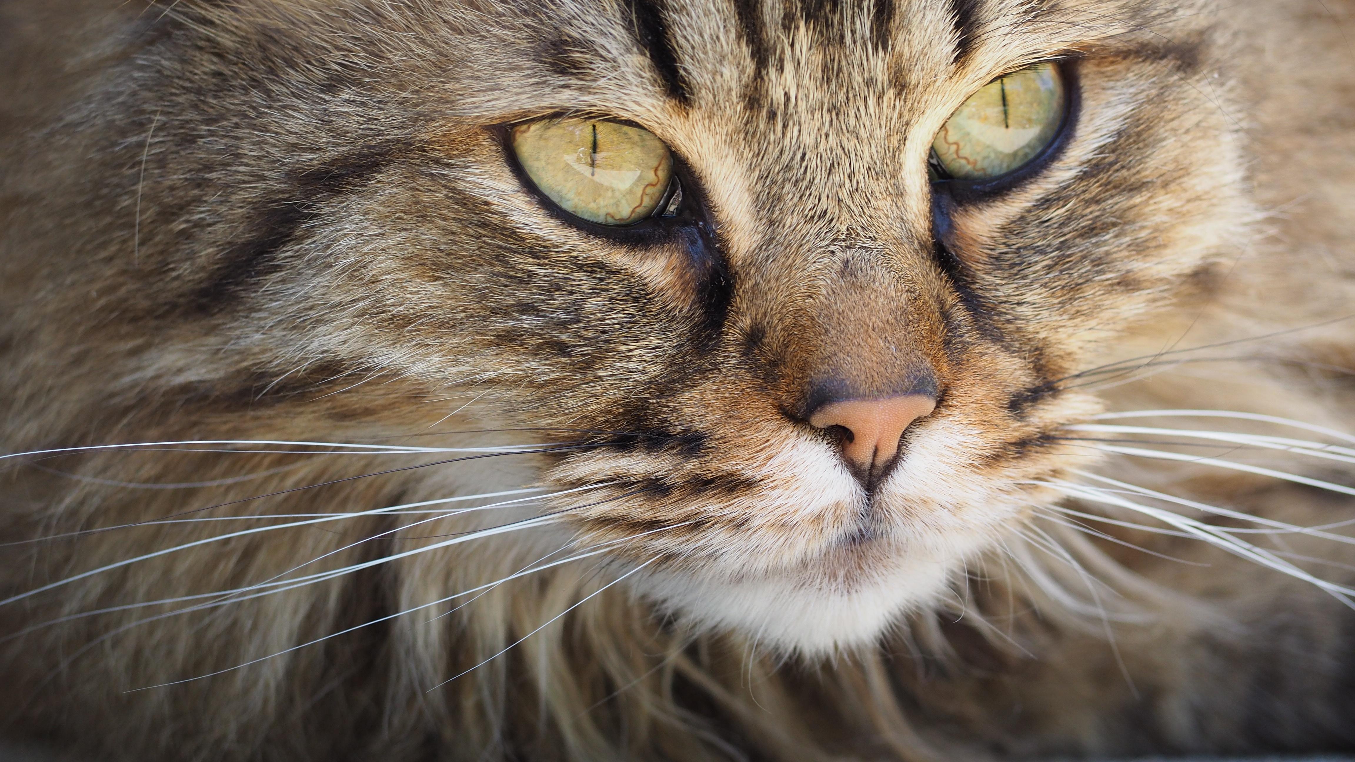 cat-portrait-kitten-cute-128884