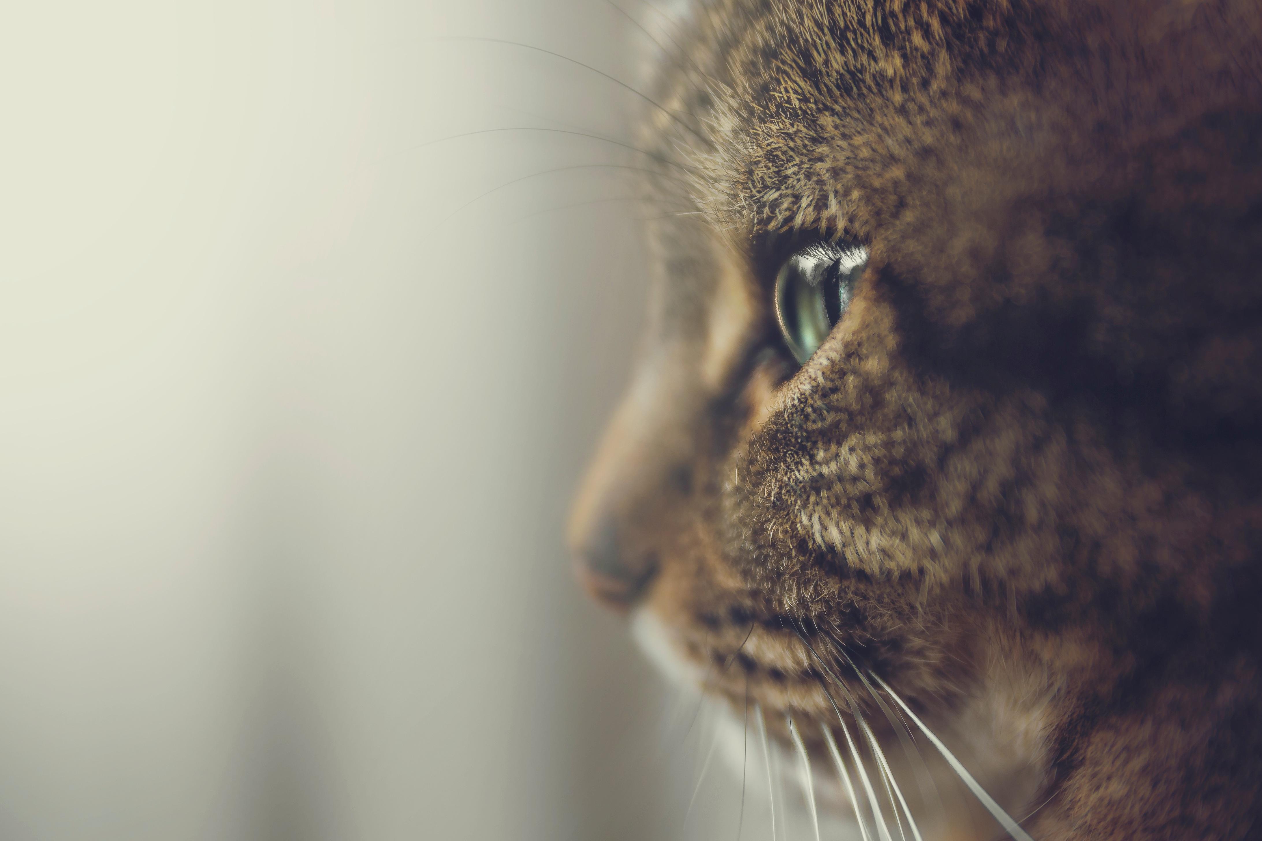 cat-2593883