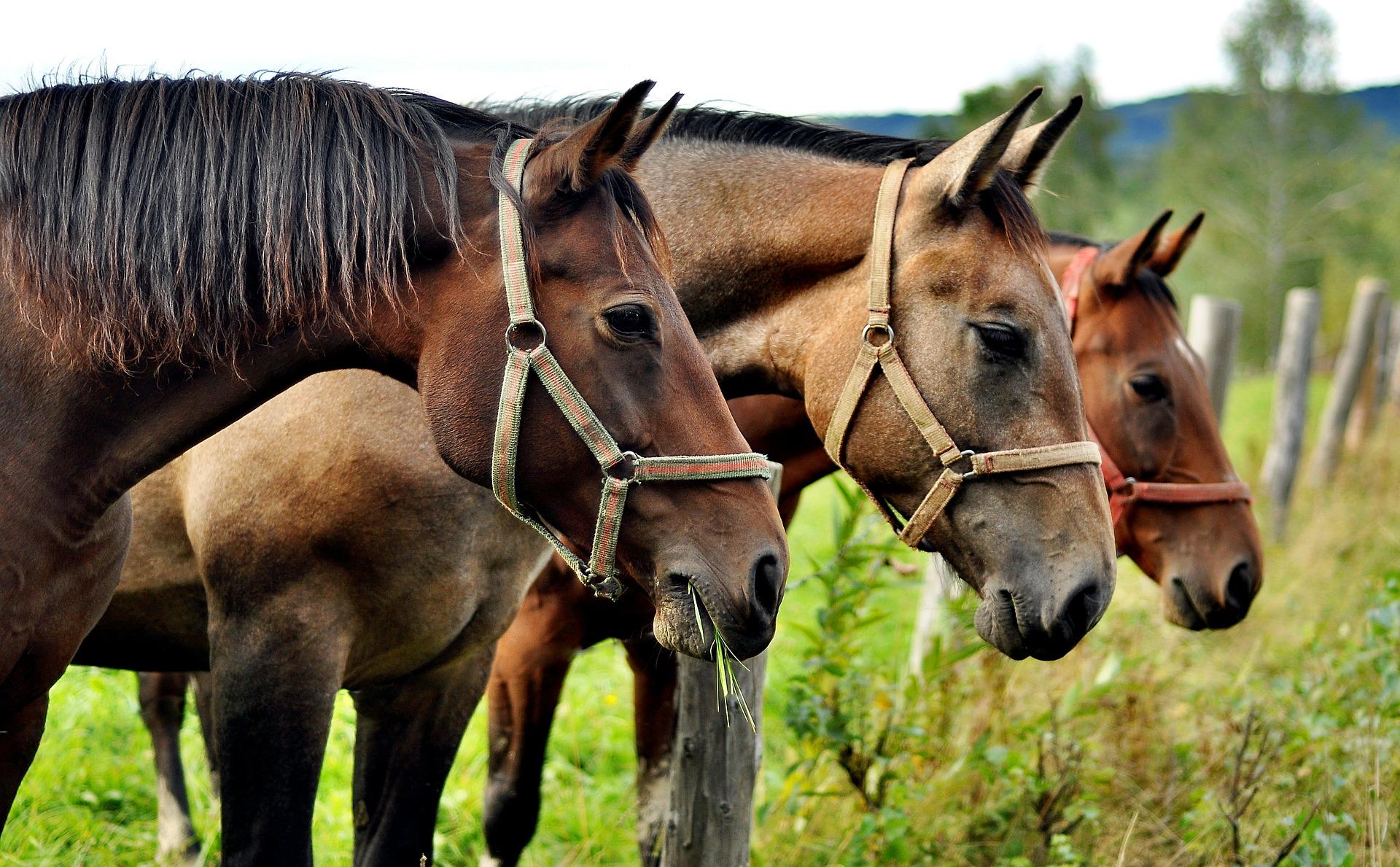 horses-2962718_1920