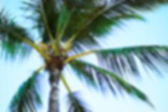 Palm Series 1 .jpg