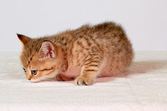 Genya's kittens