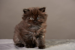 Typhanie's kittens