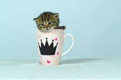 Ricotta's kitten