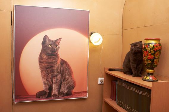 Nika chat scottish straight chocolay in art Gallery
