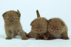 kittens_23-066.jpg