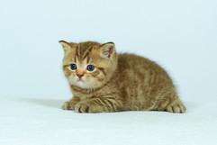 kittens_23-090.jpg