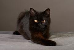 Felicia's  kitten