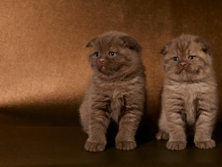 Les chatons de Greta ont cinq semaines