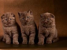 Kittens_Greta_2021_A064.jpg