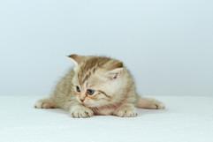 Foldikcat