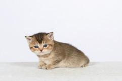 Genya's kitten