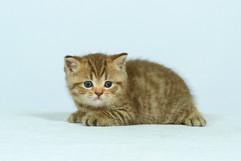 kittens_23-089.jpg