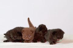 Felicia's kittens