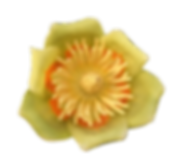 Liriodendron - transparent small scale.png