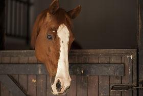 horse-2642112.jpg