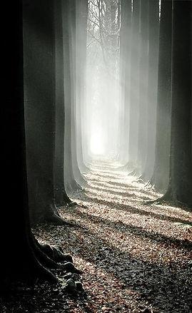 pathway_1.jpg