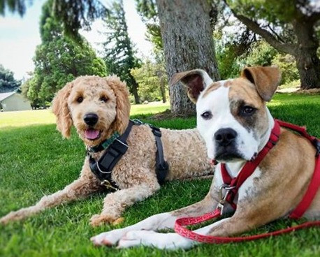 2 Dog-Students enjoying a day in the park.