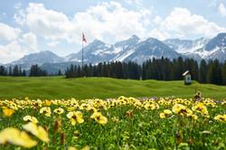 Golf_Fruehlingsblumen_31.5.17_035