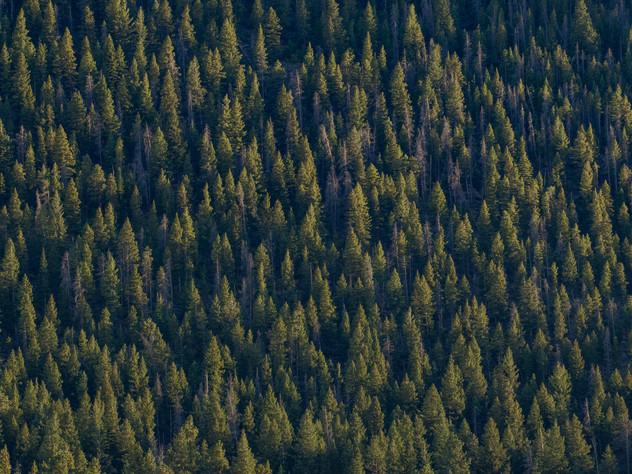 Rocky Pines