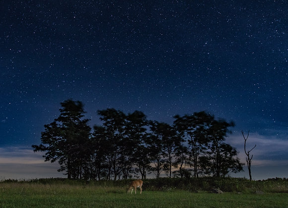 The Midnight Deer