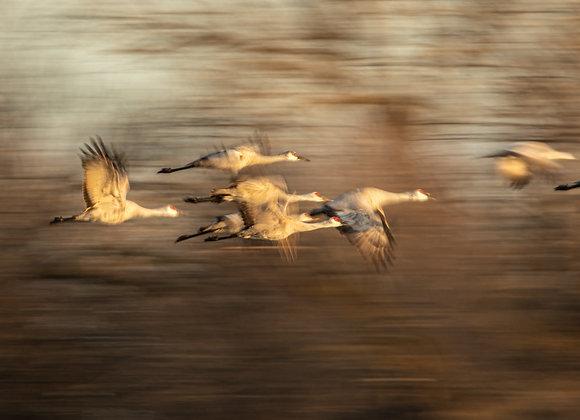 Long Ex Cranes