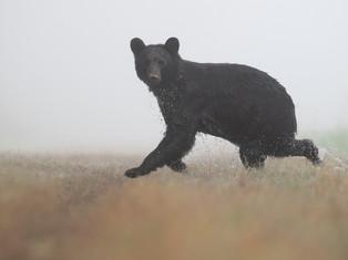 Running Wet