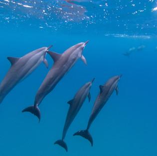 Ocean Dwellers