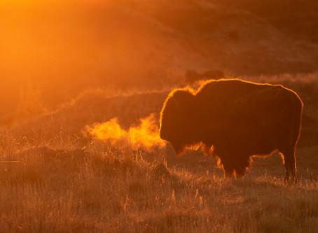 A Hidden Gem | Theodore Roosevelt National Park