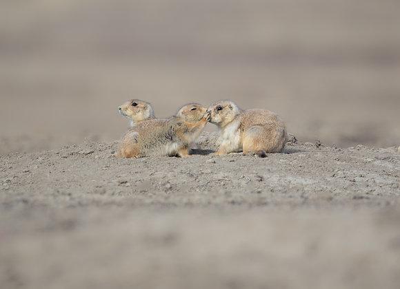 Prairie Kisses
