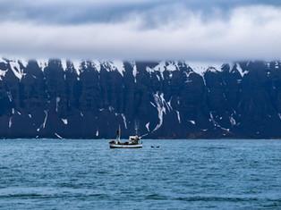 Icelandic Whales