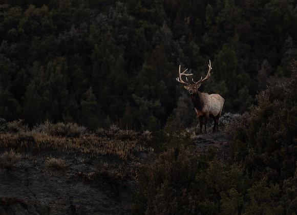 Dark Elk
