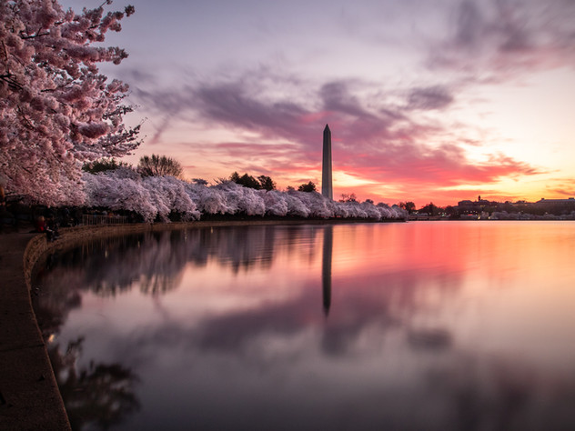 Dawn of the Blossoms