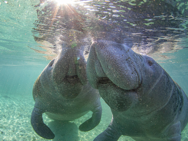 Manatee Meeting