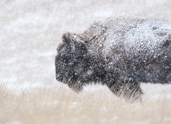 Buffalo World