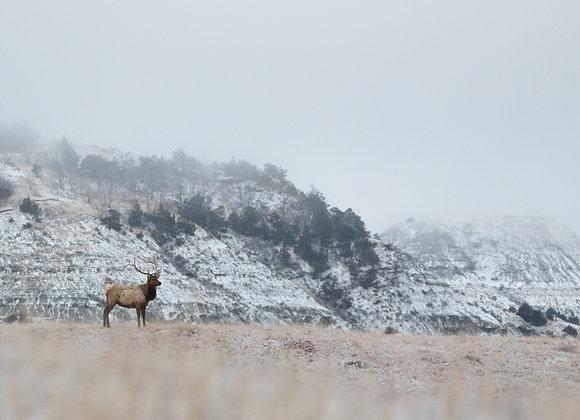 Elk in the Clouds
