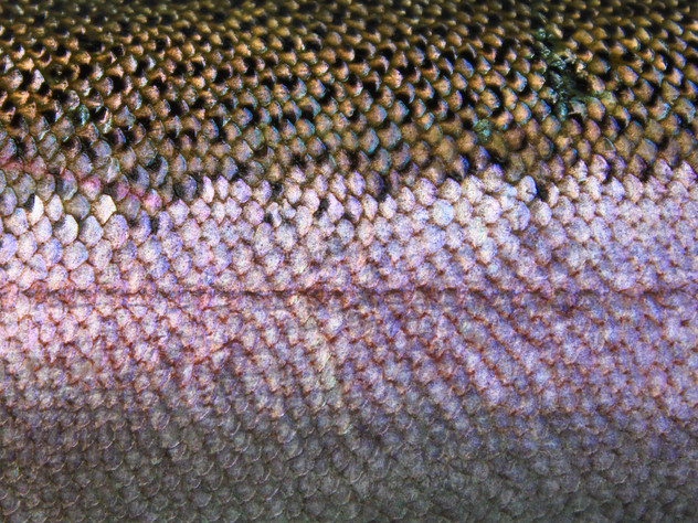 Fish Skin Steel
