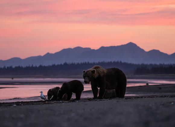 Family Sunset Views