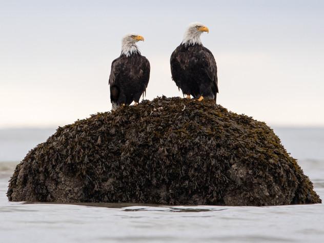 Eagle Talk