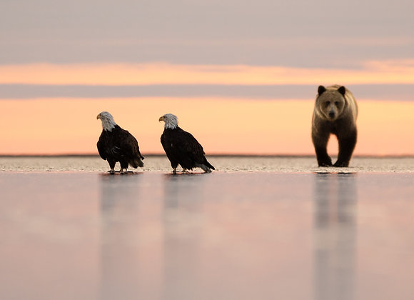 The Bear and Eagles