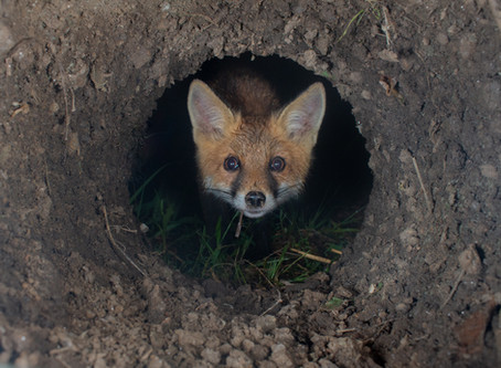 Got the Shot | Operation Fox Hole