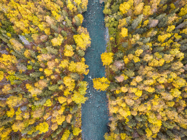 Fall from Above