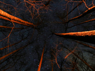 Shenandoah Night Skies