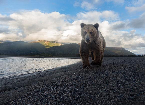 Wide Angle Bear