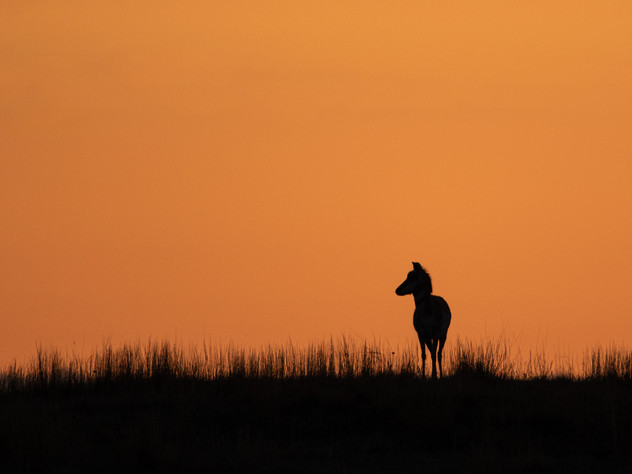 Pronghorn Mornings